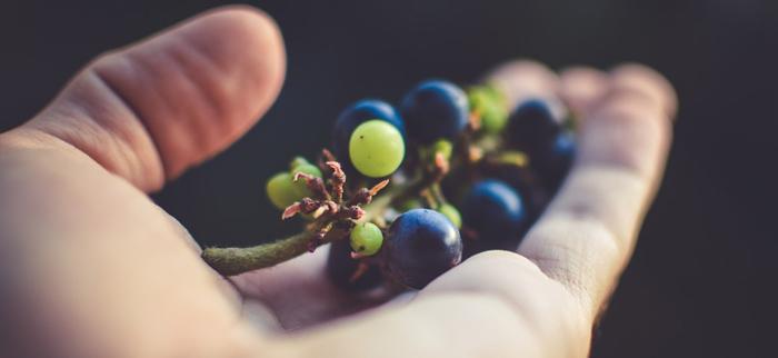 olej z winogron