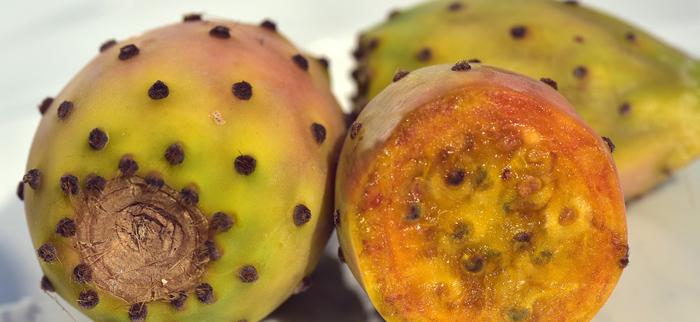 pestki opuncji figowej