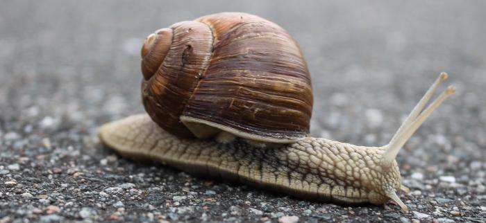 właściwości śluzu ślimaka