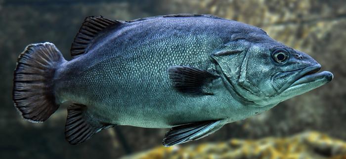 kolagen rybi - dlaczego jest tak ważny dla zdrowia?